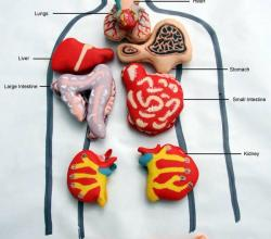Anatomy Lessons With Vanilla Macaroons