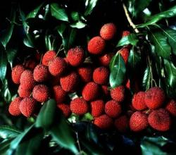 Top 10 Sustainable Fruits