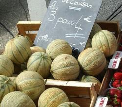 How To Protect Ripe Melons From Animals?