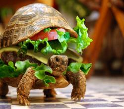 Do Turtles & Burgers Go Together?