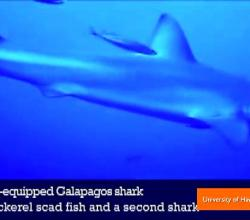Never-Before-Seen Look at the Secret Lives of Sharks