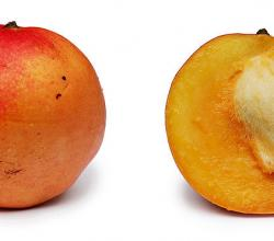 Apple Mango And Cross Section