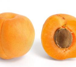 Apricot And Cross Section