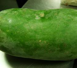 Ash Guard ( White Guard / Winter Melon )