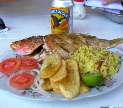 Pargo Rojo Red Snapper