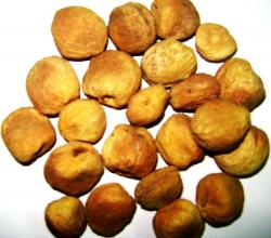 Dried Apricots in a Red Bowl