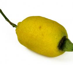 Long Lemon