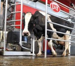 Meet the Cow Milking Robot Which Milks 180 Times a Day !