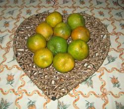 Nagpuri Orange