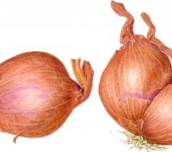 How to Cut Shallots