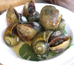 Snails in Bordelaise Sauce