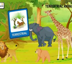 Terrestrial Animals | Animals on Land | Kindergarten