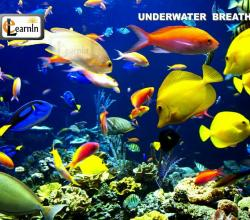Underwater Breathing in Animals - Elementary Science