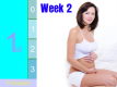 Pregnancy - First Trimester: Week 2