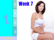 Pregnancy - First Trimester: Week 7 Video