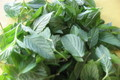 Indian Mint Chutney