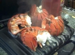 Andy in the Lobster Gram Test Kitchen Parboiling & Grill Finishing Maine Lobster Tails