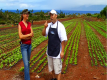 Hawaiian Grown Kitchen :  An Insight Into Arugula Farming Video