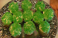 Betty's Blarney Stones (Vanilla Cupcakes and Vanilla Frosting Recipes Included)