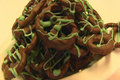 Betty's Candy Coated Pretzels for St. Patrick's Day