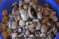 How To Make Home Pickled Mushrooms