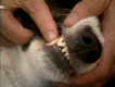 Good Dog Series 4, 2gd4059 - Tips On Dog Diet And Dental Hygiene Video