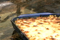 How To Make Macaroni And Blue Cheese Casserole
