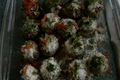 How To Make Baked Stuffed Mushrooms
