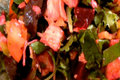 How To Make Roasted Beet And Chicken Salad
