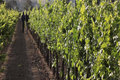 Seasons Of The Vineyard: Summer (a Jordan Winery Series) Video