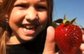 Picking My Own Strawberries At Mcpeaks Orchard, Pittsburg Texas