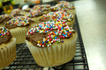 Vegan Vanilla Cupcakes with Chocolate Icing