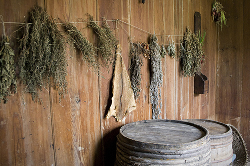 Air Drying Herbs in the kitchen