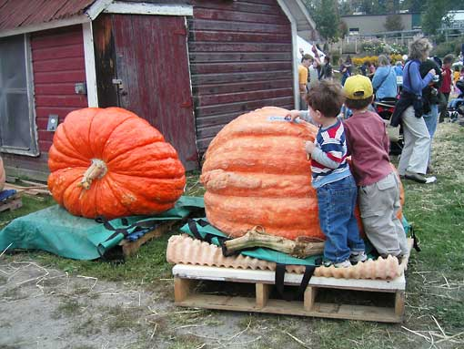 Youngsters having a good time in Barnesville pumpkin festival