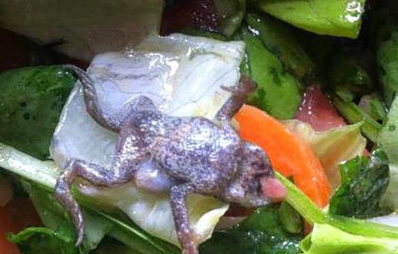 DEAD-FROG in SPINACH