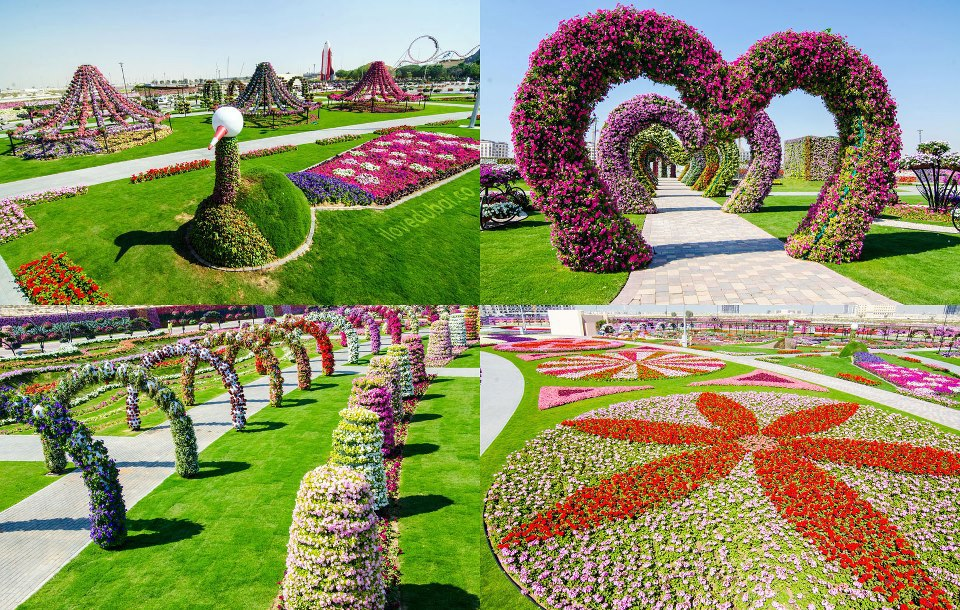 Image result for United Arab Emirates: Dubai Miracle Garden pic