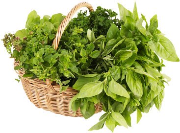 Herb up your life!