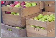Using wooden crates to keep apples over winter