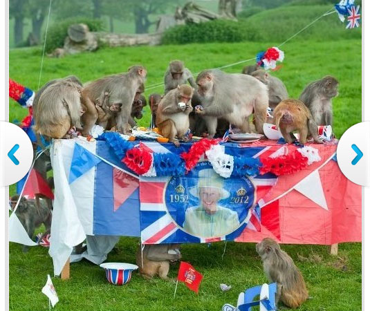 Monkey Party for Queen