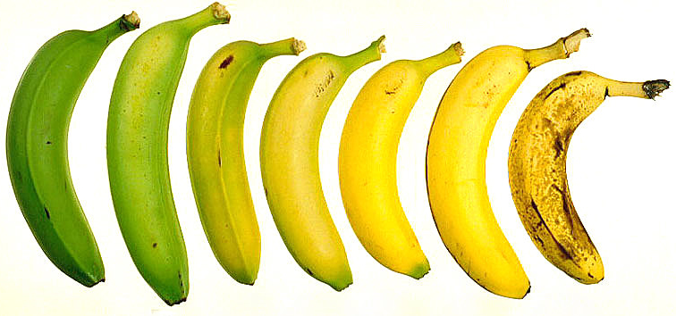 Stages in the Life of a Banana
