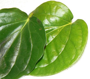 Betel leaves
