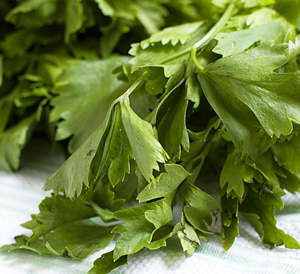 Chinese Celery Leaves