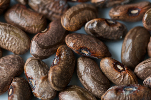 Vegetarian dried bean recipes