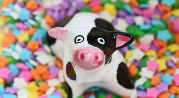 Cows Eat Candy