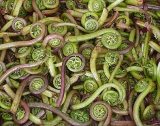 Benefits of Fiddlehead Ferns