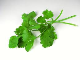 Cilantro leaf benefits