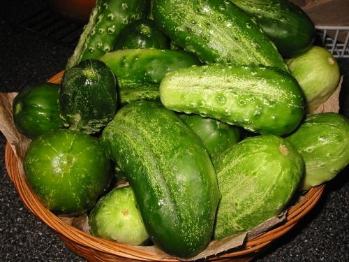 Cucumbers