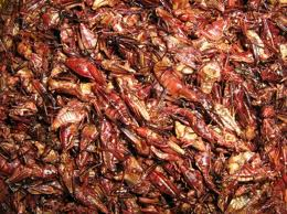 How To Eat Chapulines