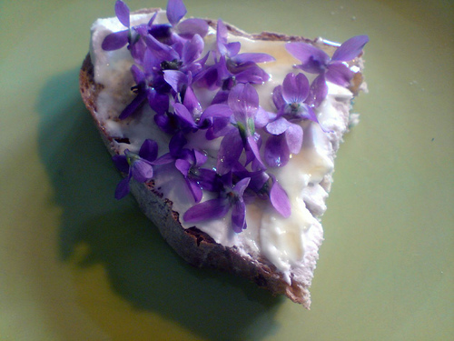 cooking, wild violets, health benefits