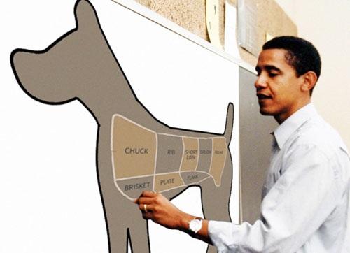 Στο επίκεντρο των εκλογών ο σκύλος....